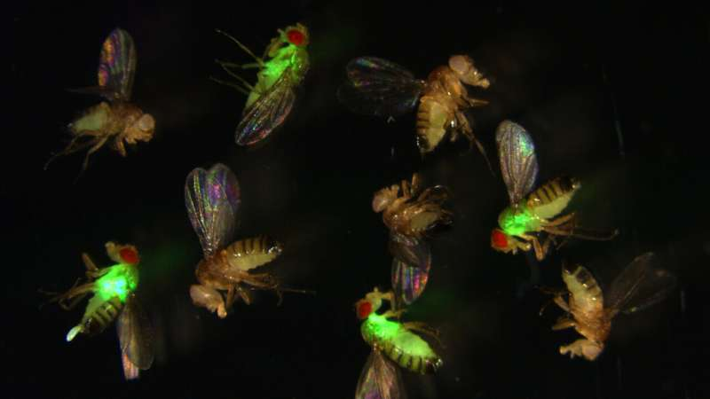 CRISPR reveals the secret life of antimicrobial peptides