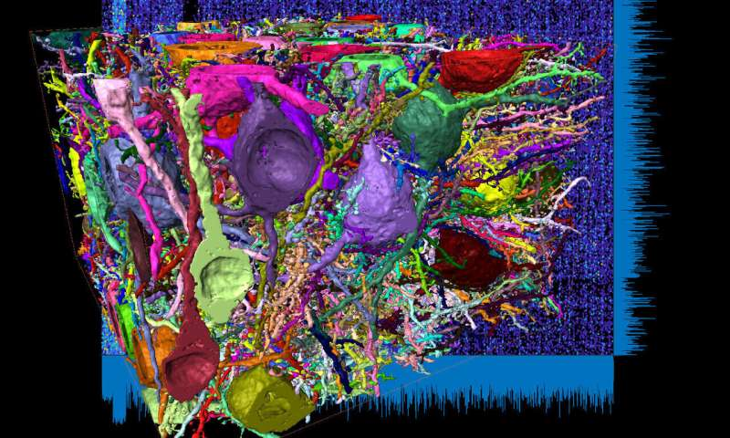 Deep inside the brain: Unraveling the dense networks in the cerebral cortex