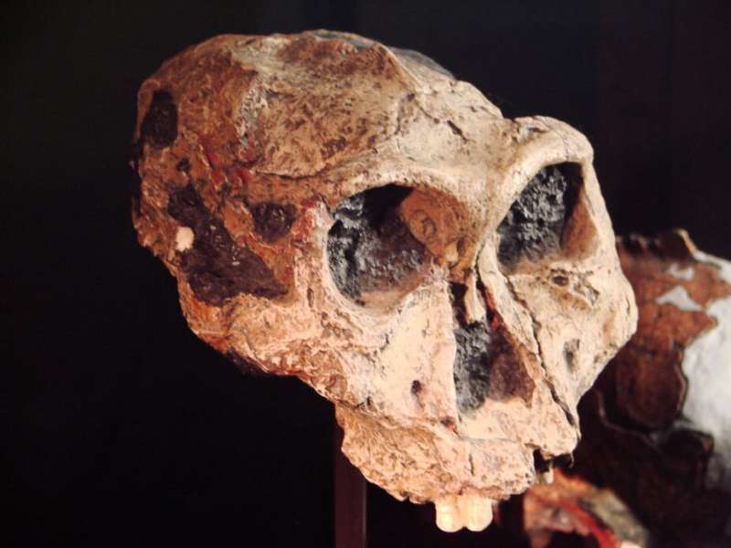 Discovered: the earliest known common genetic condition in human evolution