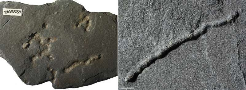 Discovery of the oldest evidence of mobility on Earth