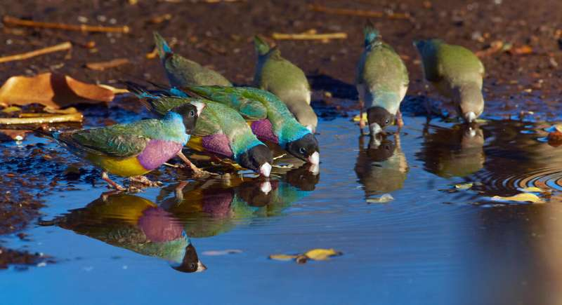 eDNA reveals where endangered birds of a feather flock together