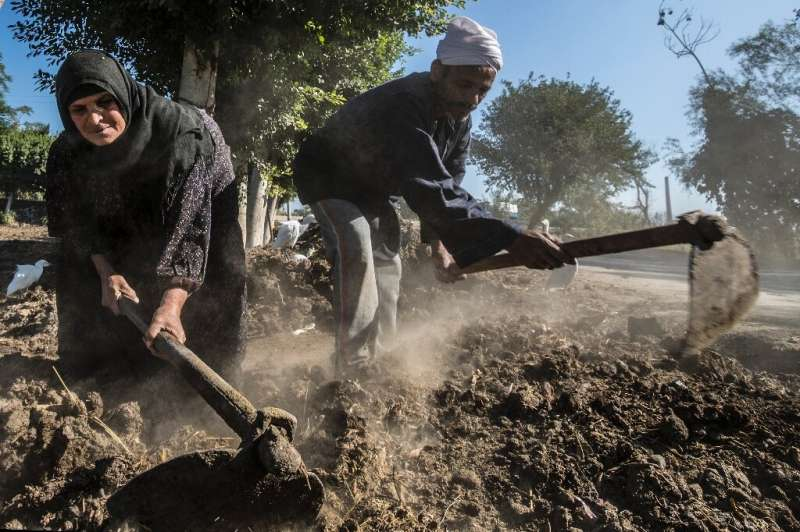 Egyptian farmers Zannuba Mohammed and her husband Karam Shaaban work in their farm which gets its irrigation water from a canal,