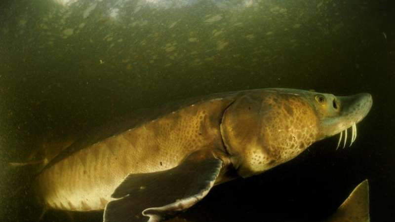 Eighty-eight percent decline of big freshwater animals