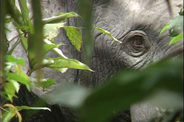 Elephant extinction will raise carbon dioxide levels in atmosphere