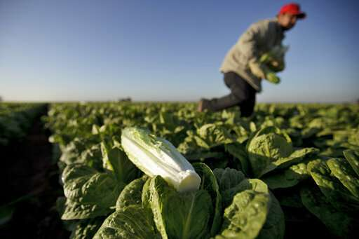 Emails show FDA worry after romaine outbreaks