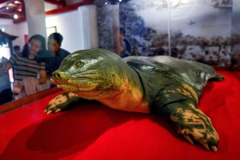 Eternal shell: An embalmed sacred giant turtle on display at Hoan Kiem lake in Hanoi