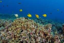 Even Coral Reefs are affected by socio-economics