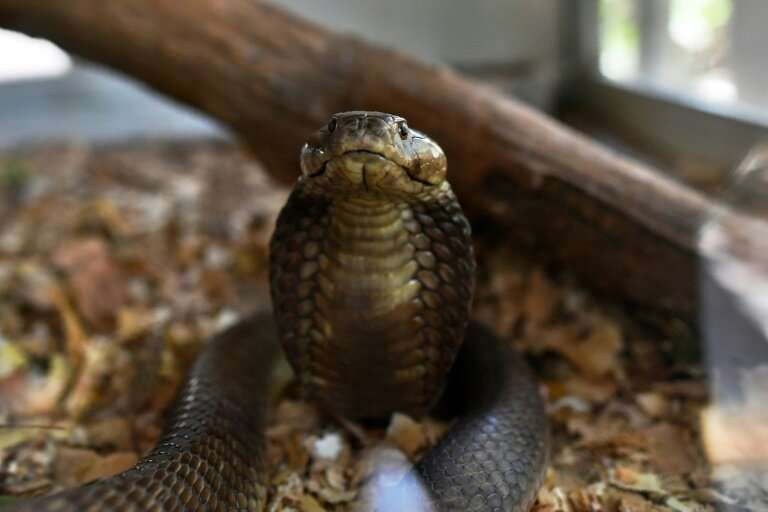 Every year, snakes bite about 5.4 million people worldwide but the figure is likely a vast underestimation, given underreporting