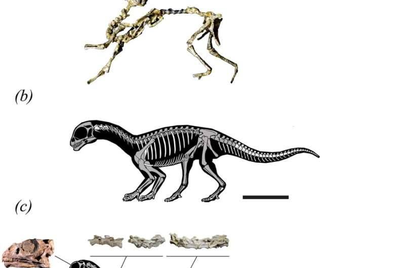 Evidence found of dinosaur that walked on all-fours when young and switched to bipedalism as an adult