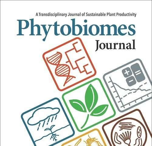 El uso excesivo de fertilizantes fosfatados puede reducir las funciones microbianas críticas para la salud de los cultivos