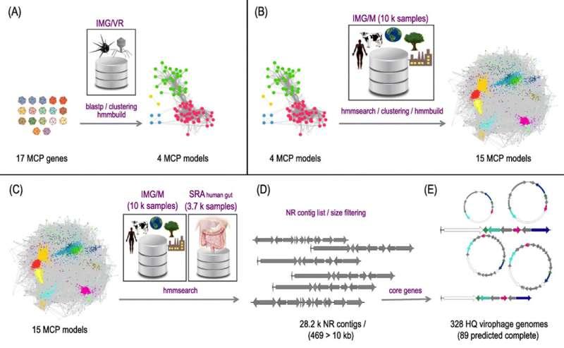 Expanding virophage diversity
