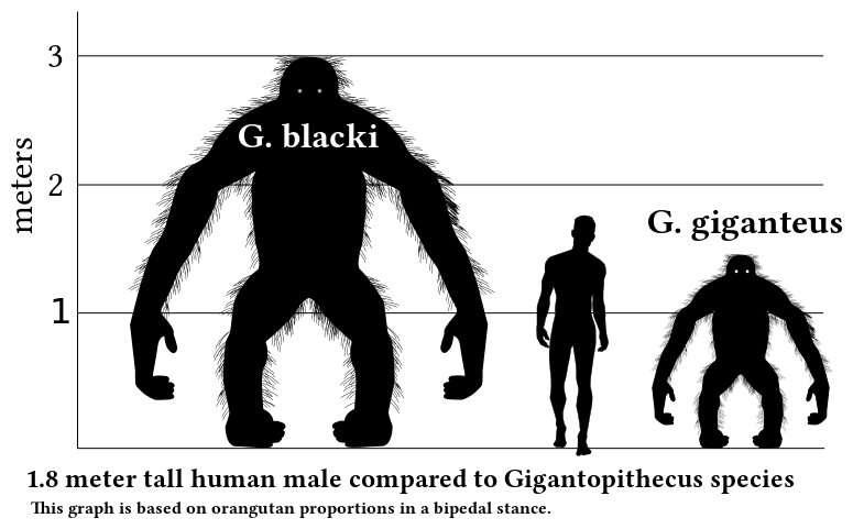 Extinct giant ape directly linked to the living orangutan