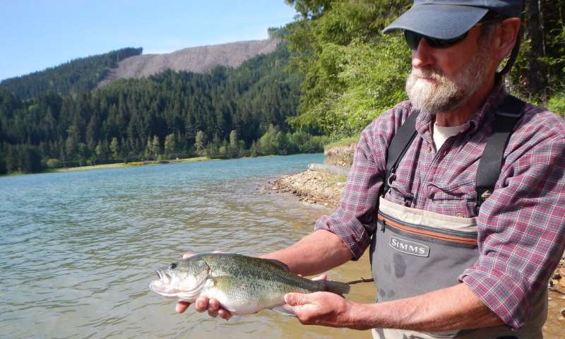 Extreme draining of reservoir aids young salmon and eliminates invasive fish