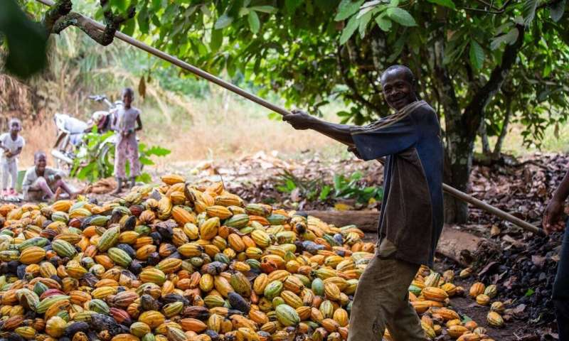 Fairtrade benefits rural workers in Africa, but not the poorest of the poor