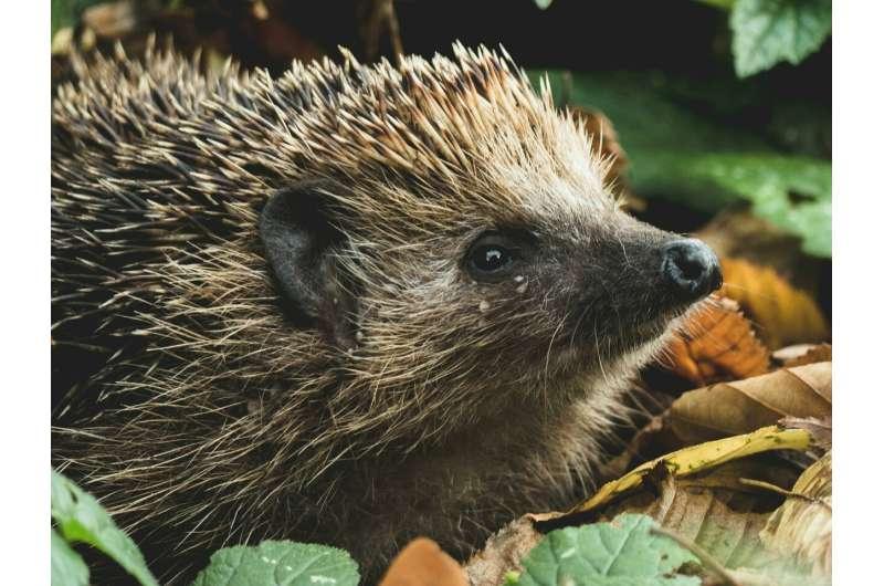 FEFU scientists found persistent organic pollutants in animal fur