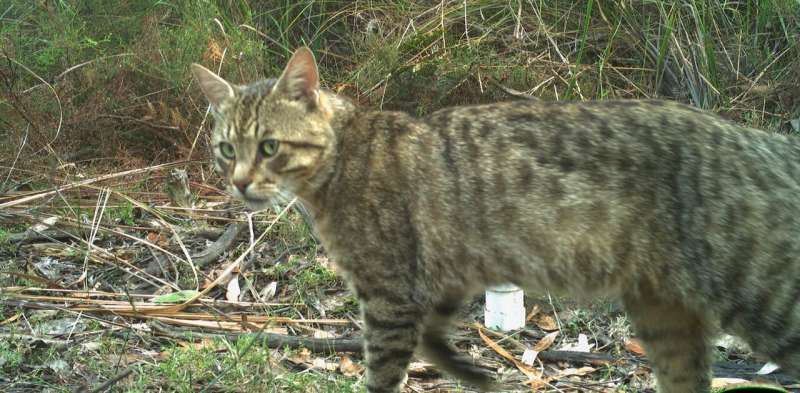 Feral cat cull: why the 2 million target is on scientifically shaky ground