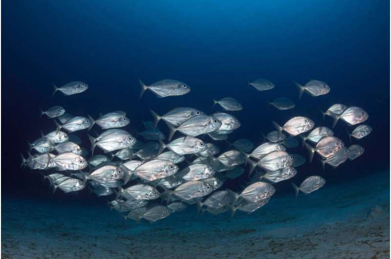 Fewer fish may reach breeding age as climate change skews timing of reproduction, food availability