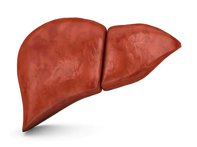 Fibrosis, steatosis of the liver observed in some young adults