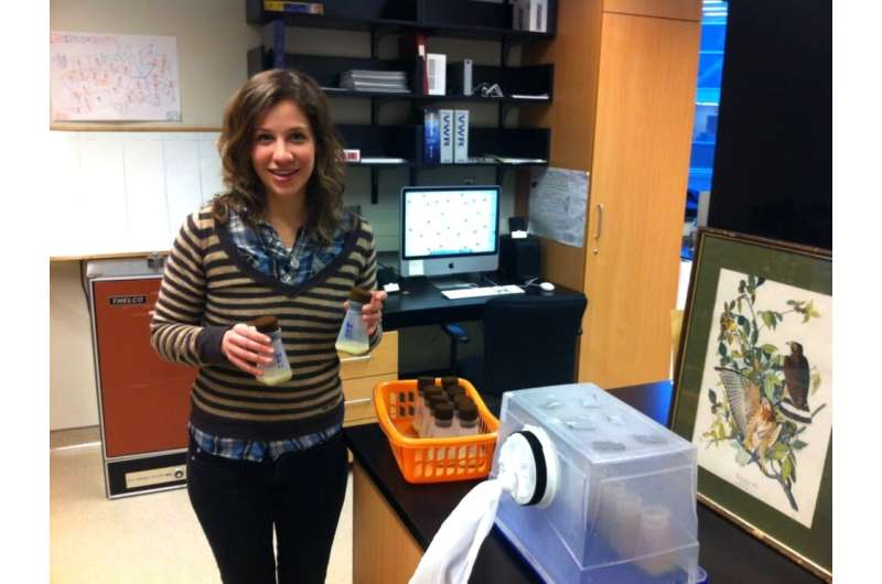 Fighting fruit flies: Aggressive behavior influenced by previous interactions