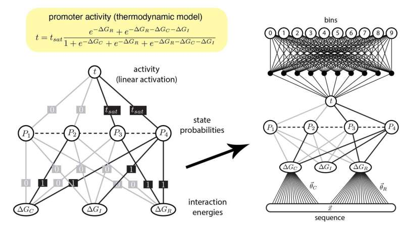 Finally, machine learning interprets gene regulation clearly