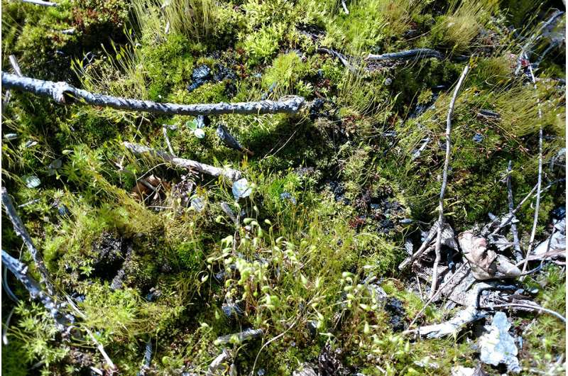 Fire-spawned forest fungi hide out in other organisms, study finds