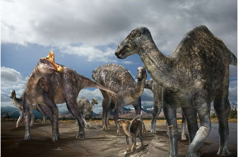 First-confirmed occurrence of a lambeosaurine dinosaur found on Alaska's North Slope