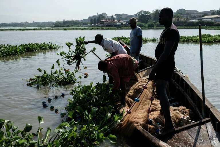 Fishermen on Lake Victoria pull the tangled water hyacinth out of their net by hand.