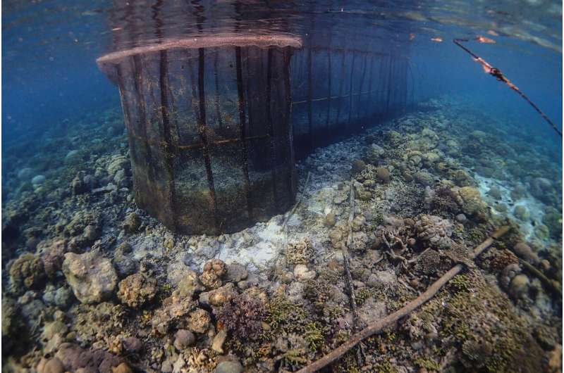 Fish fences across the tropical seas having large-scale devastating effects