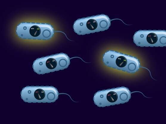 Flippable DNA switches help bacteria resist antibiotics and are more common than thought