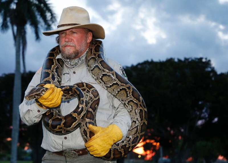 Florida snake catcher Tom Rahill handles a 10-foot Burmese python at the Everglades Holiday Park in Fort Lauderdale