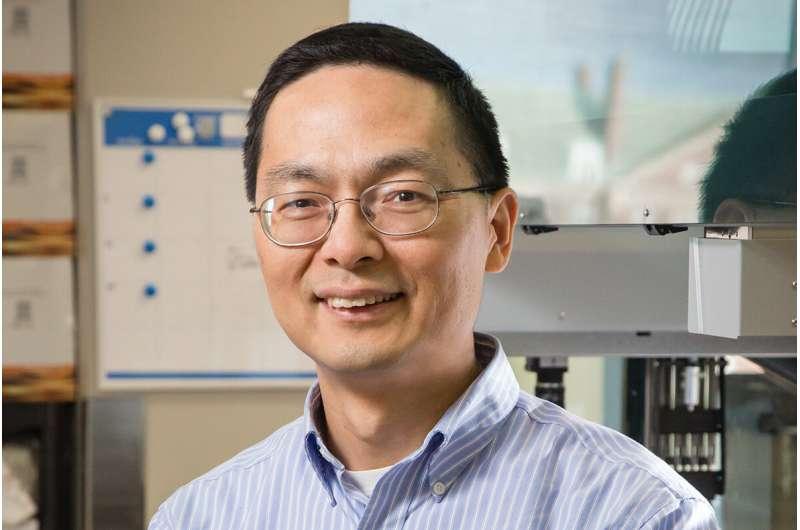 For CRISPR, tweaking DNA fragments before inserting yields highest efficiency rates yet
