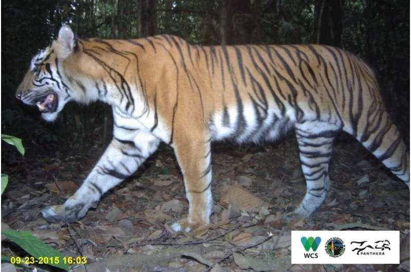 Forest fragments surprising havens for wildlife