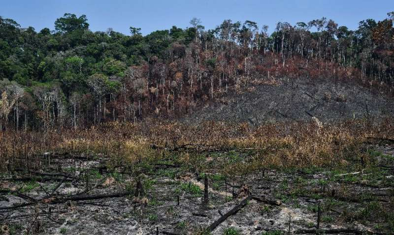 Forest scarred by fire near Moraes Almeida, a town along a section of the trans-Amazonian highyway, in Itaituba, Para state, Bra