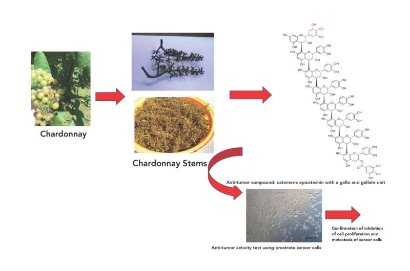 Forget the Chardonay, pass me the grape stems! Anti-tumor activity in prostate cancer cells
