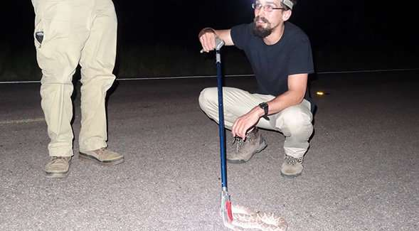 For night vision, snakes see a clear choice