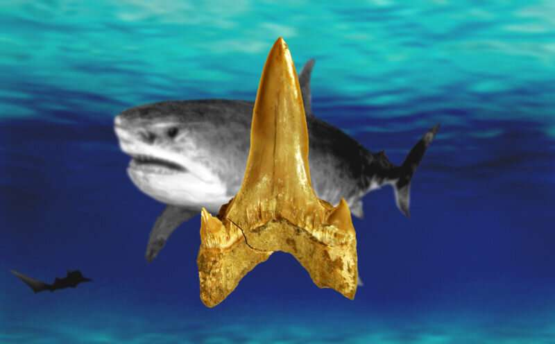 Fossil dig leads to unexpected discovery of 91-million-year-old shark new to science