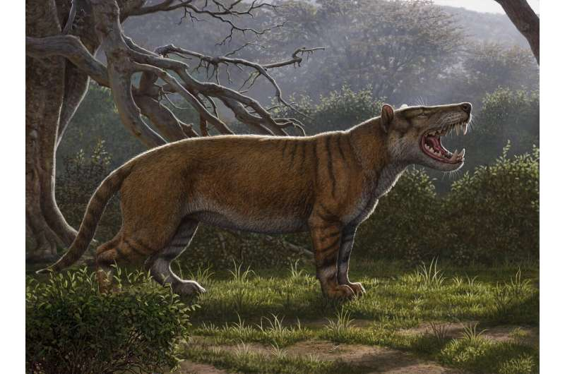Fossils found in museum drawer in Kenya belong to gigantic carnivore