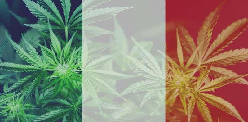 France forgets own golden age of medical marijuana