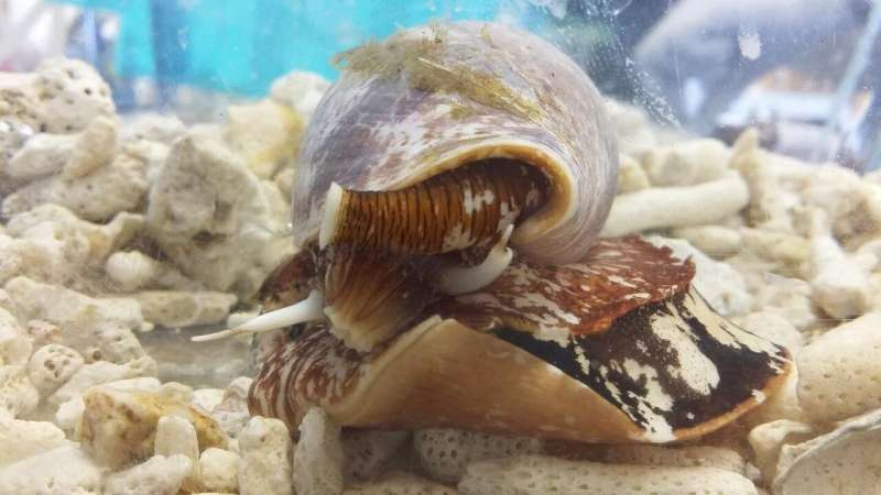 From cone snail venom to pain relief
