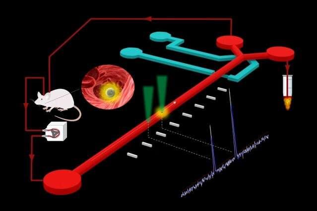 From microfluidics to metastasis