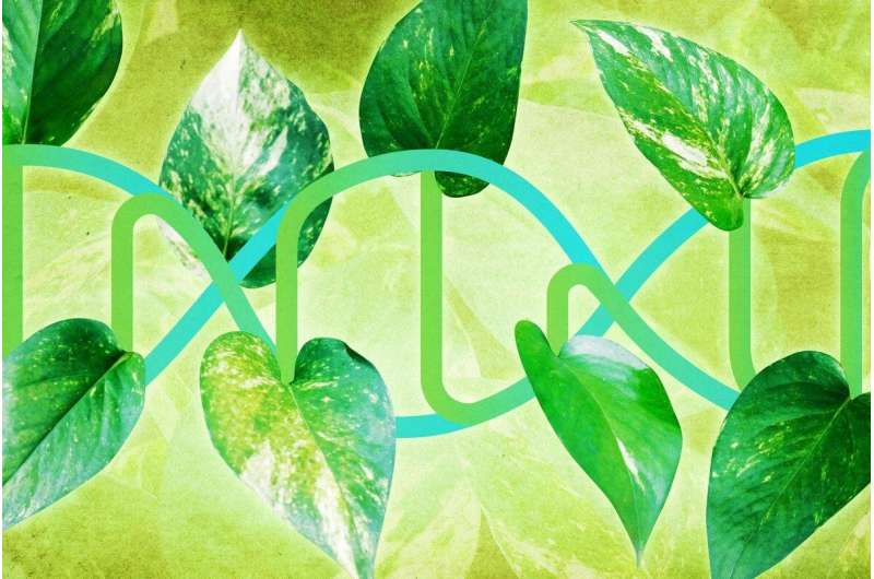 From plants, team extracts a better way to determine what our genes do