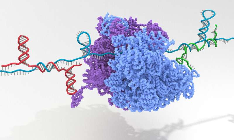 Gene-OFF switches tool up synthetic biology
