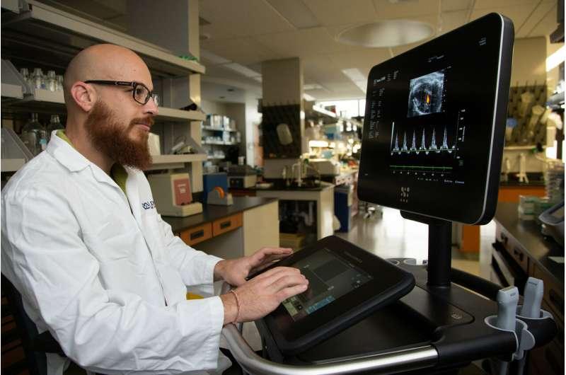 Gene transfer improves diabetes-linked heart ailment
