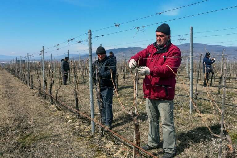 Georgia's winemaking tradition stretches back thousands of years