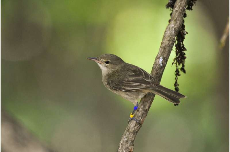Getting help with the kids slows down ageing in female birds