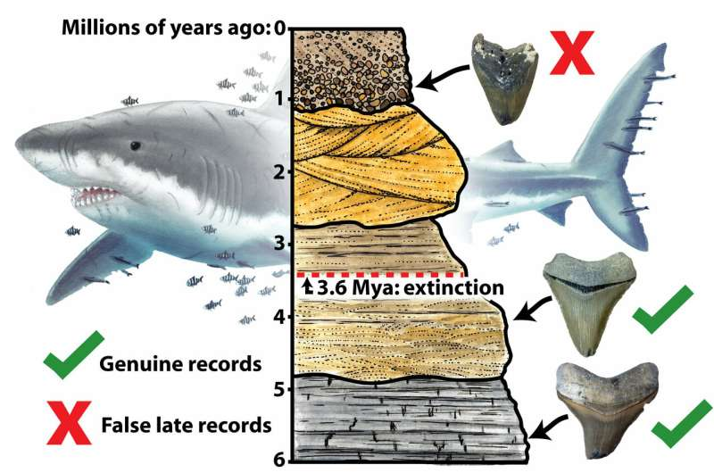 Giant 'megalodon' shark extinct earlier than previously thought