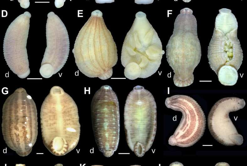 Gimme shelter: Seven new leech species call freshwater mussels home