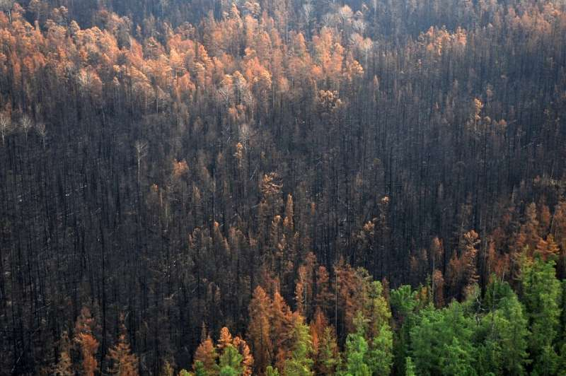 Greenpeace estimates that wildfires have affected more than 13 million hectares—approximately the area of Greece—across Russia s