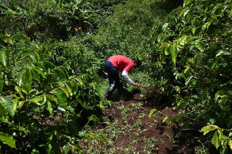 Guatemalans working on small coffee plantations are struggling to survive, all the while international businesses selling coffee