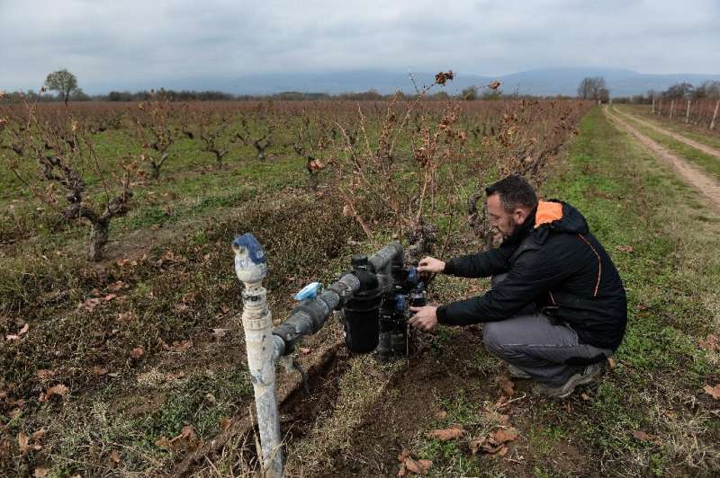 Harvesting earlier and better adapting the choice of grape varieties can help mitigate the effects of global warming